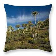 Quiver Tree Forest Throw Pillow