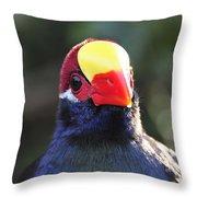 Quizzical Bird Throw Pillow