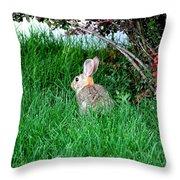 Rabbit Sitting Outdoors. Throw Pillow