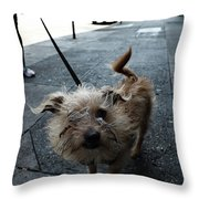 Rabid Dog Throw Pillow