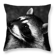 Raccoon Looking Throw Pillow