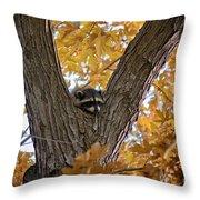Raccoon Nape Throw Pillow