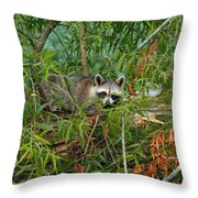 Raccoon Napping On Log Throw Pillow