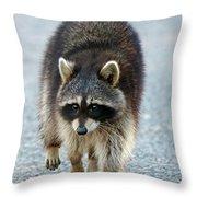 Raccoon On The Prowl Throw Pillow