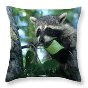 Raccoon--up We Go Throw Pillow