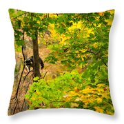 Racoon In Fall Trees Throw Pillow