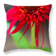 Radient Red Throw Pillow