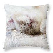 Ragdoll Kitten Asleep Throw Pillow