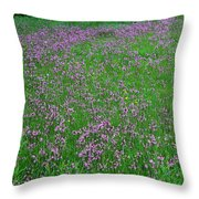 Ragged Robin IIi Throw Pillow