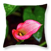 Rain Coated Pink Calla Lily Throw Pillow