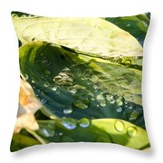 Rain Collecting On Hosta Leaves Throw Pillow