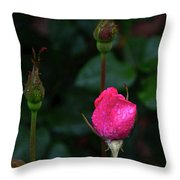 Rain Covered Pink Rose And Buds Throw Pillow