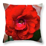 Rain Covered Red Rose Throw Pillow