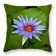 Rain Drenched Blue Lotus In Grand Cayman Throw Pillow