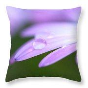 Rain Droplets On A Daisy Throw Pillow