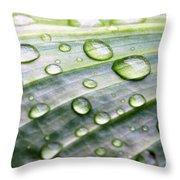 Rain Drops On A Leaf Throw Pillow