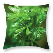 Rain Drops On Green Leaves Throw Pillow