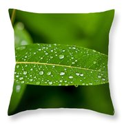 Rain Drops On Leaves #1 Throw Pillow
