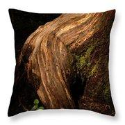 Rain Forest Light Throw Pillow