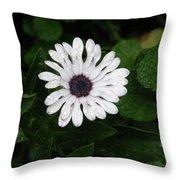 Rain On A White Flower Throw Pillow