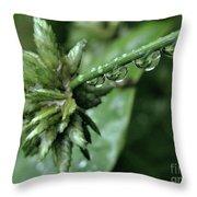 Rain On The Umbrella Plant 2 Throw Pillow