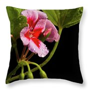 Rain Refreshed Throw Pillow
