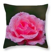 Rain Spattered Rose Throw Pillow