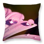 Rain Water On Daisy One Throw Pillow