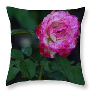 Rain Wet Rose Throw Pillow