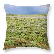 Rainbow And Lupine, Grand Teton Nm, Wyoming Throw Pillow