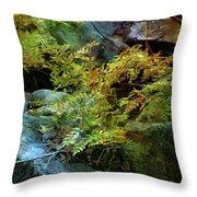 Rainbow Autumn Ferns At Pickle Creek 6303 H_3 Throw Pillow
