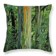 Rainbow Eucalyptus Throw Pillow