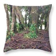 Rainbow Falls Park, Hilo Throw Pillow