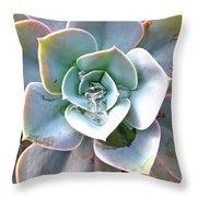 Rainbow Succulent - My Cup Runneth Over Throw Pillow