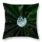 Raindrop Ammonite Throw Pillow