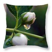 Raindrop Garden Throw Pillow