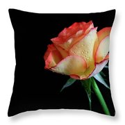 Raindrop Rose Throw Pillow by Tracy Hall