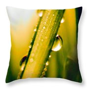 Raindrops On A Blade Of Grass Throw Pillow by Mariola Bitner