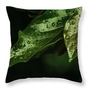 Raindrops On Avocado Leafs Throw Pillow