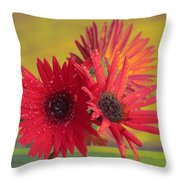 Raindrops On Gerbera Throw Pillow