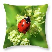 Raindrops On Ladybug Throw Pillow
