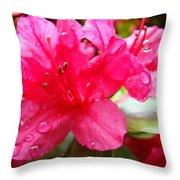Raindrops Red Azaleas Art Prints Water Drops Azalea Flowers Throw Pillow