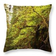 Rainforest Awakening Throw Pillow