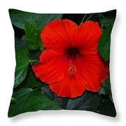 Rainforest Beauty Throw Pillow
