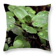 Rainy Day 11 Throw Pillow