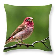 Rainy Day Bird - Purple Finch Throw Pillow by Christina Rollo