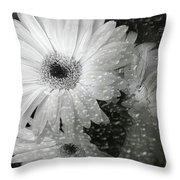 Rainy Day Daisies Throw Pillow