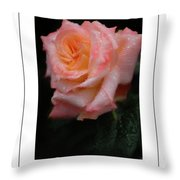 Rainy Rose In Macro Poster Throw Pillow
