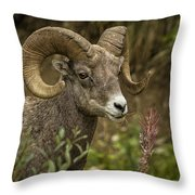 Ram Eating Fireweed Cropped Throw Pillow