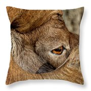 Ram Detail Throw Pillow